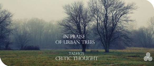 20170213-in-prasie-of-urban-trees-celtic-thought