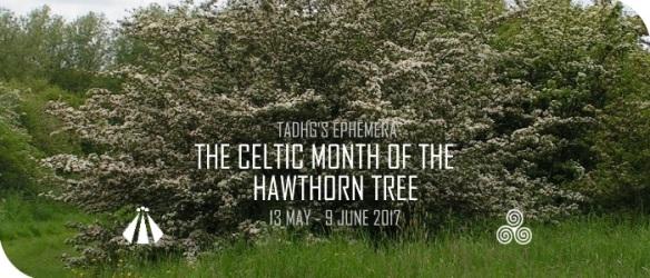 20170511 CELTIC MONTH OF THE HAWTHORN TREE EPHEMERA