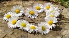 love daisy-712898__340