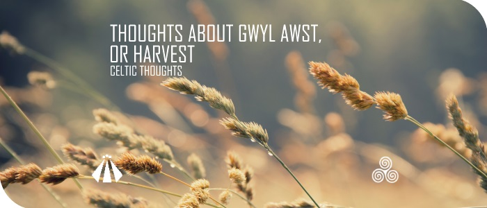 20170728 THOUGHTS ABOUT GWYL AWST OR HARVEST