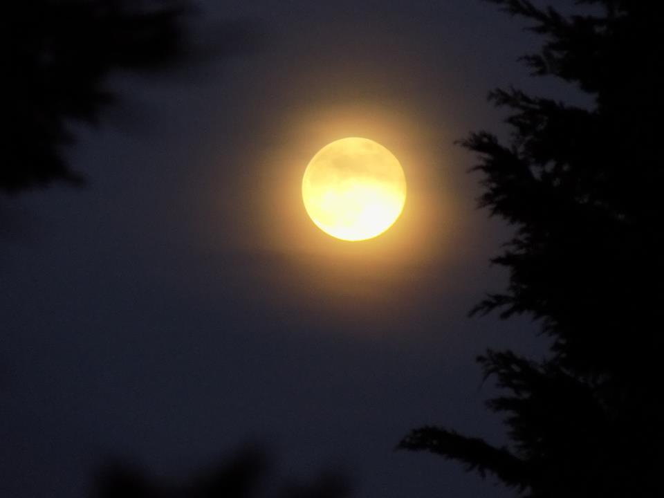 moon 18341965_1686669498015885_2704673373144549450_n