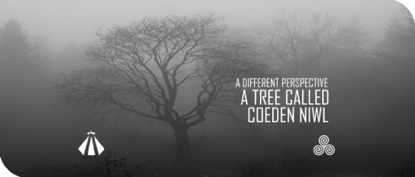 2018012 A TREE CALLED COEDEN NIWL A DIFFERENT PERSPECTIVE