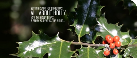 20181109 ALL ABOUT HOLLY