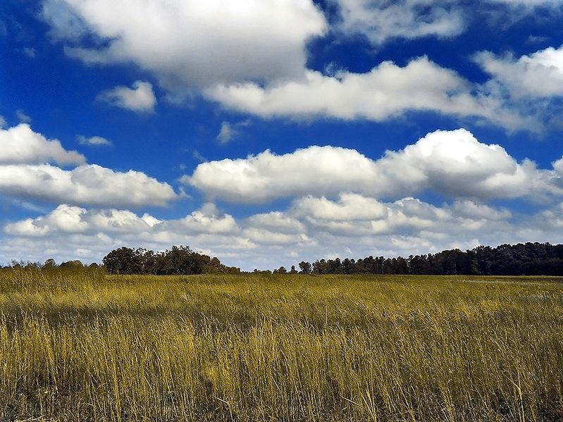 cloud cumulus 799px-GoldenMedows