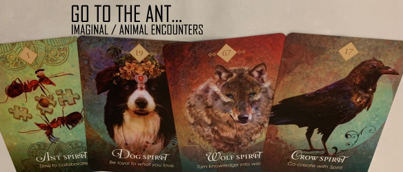 card 20200112 GO TO THE ANT IMAGINAL ANIMAL ENCOUNTERS